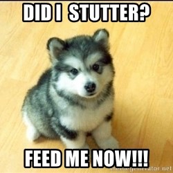 Baby Courage Wolf - Did i  stutter? Feed me now!!!