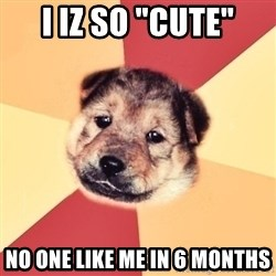 "Typical Puppy - i iz so ""cute"" no one like me in 6 months"