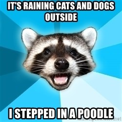 Lame Pun Coon - It's raining cats and dogs outside I stepped in a poodle