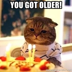 Birthday Cat - YOU GOT OLDER!