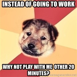 Typical Puppy - instead of going to work why not play with me  other 20 minutes?