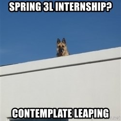 Roof Dog - Spring 3l internship? contemplate Leaping