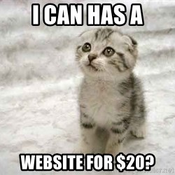 The Favre Kitten - i can has A website for $20?