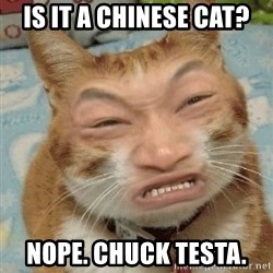 Chinacat - Is it a chinese cat? nope. chuck testa.