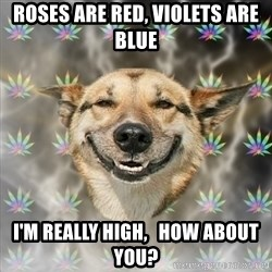 Stoner Dog - roses are red, violets are blue i'm really high,   how about you?