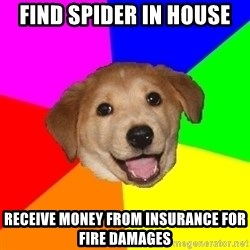Advice Dog - find spider in house receive money from insurance for fire damages
