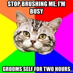 Wisdom Cat - Stop brushing me, I'm busy Grooms self for two hours