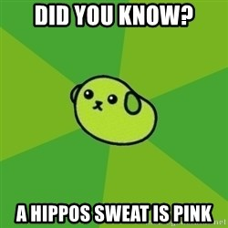 Mameshiba - Did You know? A Hippos sweat is pink