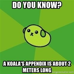 Mameshiba - Do you know? A koala's appendix is about 2 meters long
