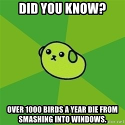 Mameshiba - Did you know? Over 1000 birds a year die from smashing into windows.