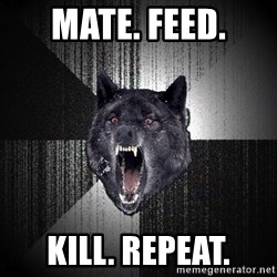 Insanity Wolf - Mate. feed. kill. repeat.