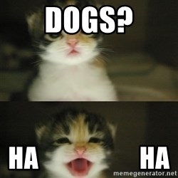 Adorable Kitten - Dogs? ha                    Ha