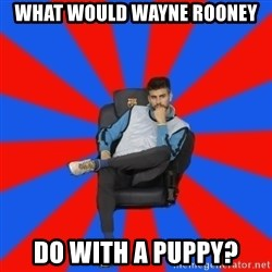 Pique the Philosopher - WHAT WOULD WAYNE ROONEY DO WITH A PUPPY?