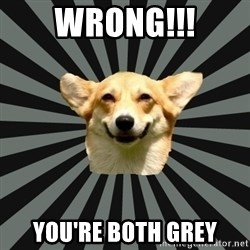 Color Blind Dog - WRONG!!! You're both grey