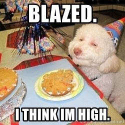 Stoned Birthday Dog - Blazed. I Think Im High.