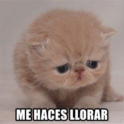 Super Sad Cat - me haces llorar