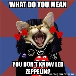 Rock fangirl kitty - what do you mean you don't know led zeppelin?