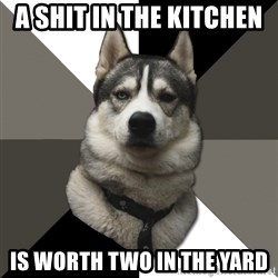 Wise Husky - a shit in the kitchen  is worth two in the yard
