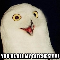O Rly Owl -  you're all my bitches!!!!!!