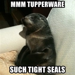 Baby Seal On Couch - mmm tupperware such tight seals