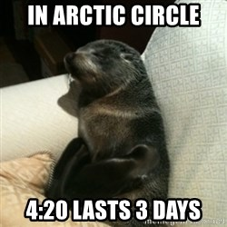 Baby Seal On Couch - In arctic circle 4:20 lasts 3 days