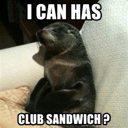 Baby Seal On Couch - I CAN HAS CLUB SANDWICH ?