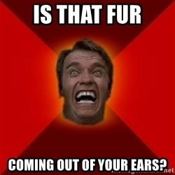 Angry Arnold - IS THAT FUR COMING OUT OF YOUR EARS?