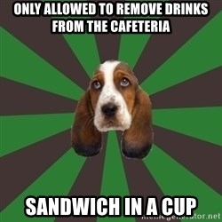 Broke College Student Basset - only allowed to remove drinks from the cafeteria sandwich in a cup