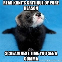 Philosophy Major Ferret - Read Kant's Critique of Pure Reason Scream Next Time you see a comma