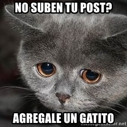 sad cat - No suben tu post? Agregale un gatito