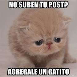 Super Sad Cat - No suben tu post? Agregale un gatito