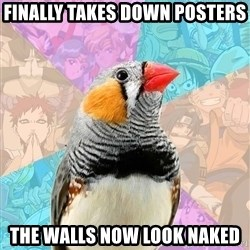 Former Otaku Finch - Finally takes down posters The walls now look naked