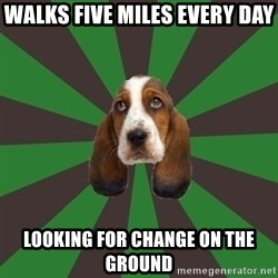 Broke College Student Basset - walks five miles every day looking for change on the ground