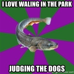 Judgemental Catfish - i love waling in the park judging the dogs
