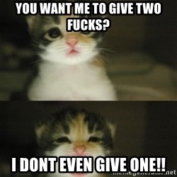 Adorable Kitten - you want me to give two fucks? I dont even give one!!