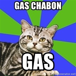 Introvert Cat - gas chabon gas