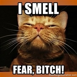 Kitty Smug - i smell fear, bitch!