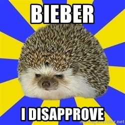 Disapproval Hedgehog - Bieber I disapprove