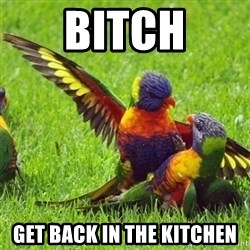 angrybird - bitch get back in the kitchen