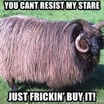 Churro Sheep Wouldn't - YOU CANT RESIST MY STARE JUST FRICKIN' BUY IT!