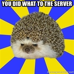 Disapproval Hedgehog - You did what to the server