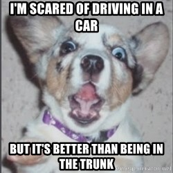 Scotty Free (Casey Anthony's Dog) - I'm scared of driving in a car but it's better than being in the trunk