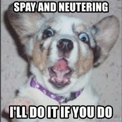 Scotty Free (Casey Anthony's Dog) - spay and neutering i'll do it if you do