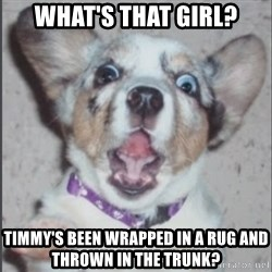 Scotty Free (Casey Anthony's Dog) - what's that girl? timmy's been wrapped in a rug and thrown in the trunk?