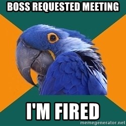 Paranoid Parrot - boss requested meeting i'm fired