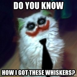 JokerCat - Do you know How I got these whiskers?