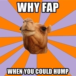 Foul Bachelor Camel - Why fap when you could hump
