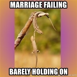 Hang in there Lizards - marriage failing barely holding on
