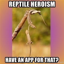 Hang in there Lizards - reptile heroism have an app for that?