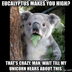 Koala can't believe it - Eucalyptus makes you high? that's crazy, man. wait till my unicorn hears about this.